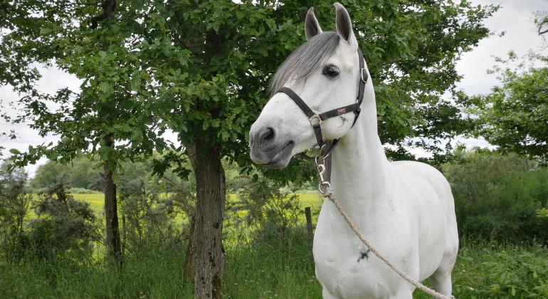 caballos puydufou3