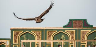 Espectáculo de aves Cetrería de Reyes en Puy du Fou España