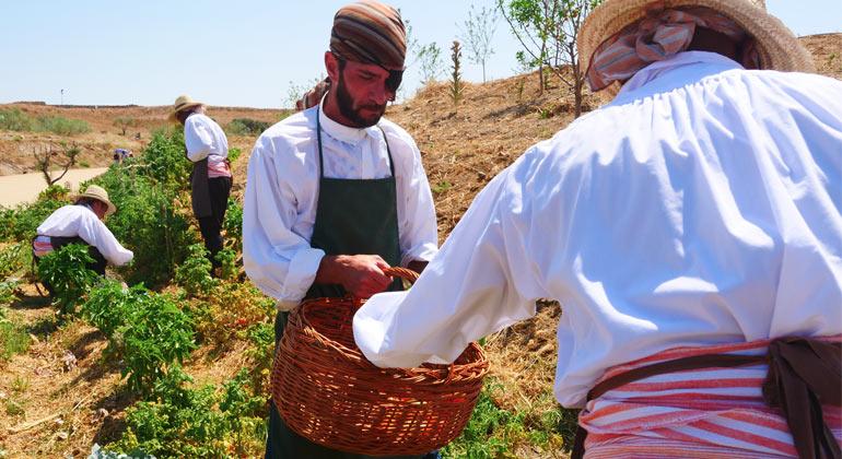 Equipo de jardinería recolectando vegetales en los huertos de Puy du Fou España
