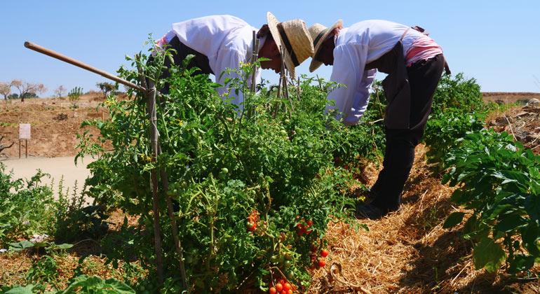 Equipo de jardinería cultivando en los huertos de Puy du Fou España